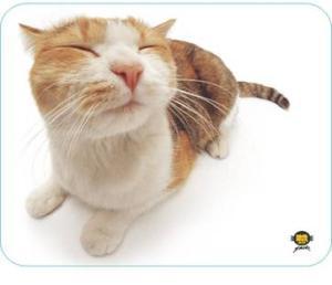 Allsop podložka pod myš - Kočka