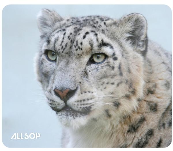 Allsop Podložka pod myš - Sněžný leopard